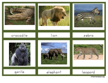 Animals of Africa (Photo from Trillium Montessori at Teachers Pay Teachers)