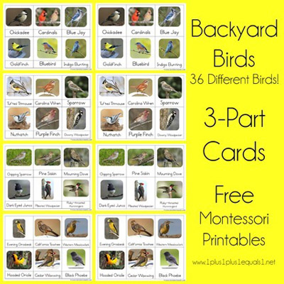 Free Backyard Birds 3-Part Cards from 1+1+1=1