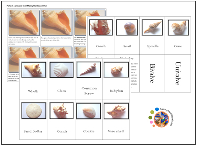 Free Shell Matching and Classification Printables from Making Montessori Ours