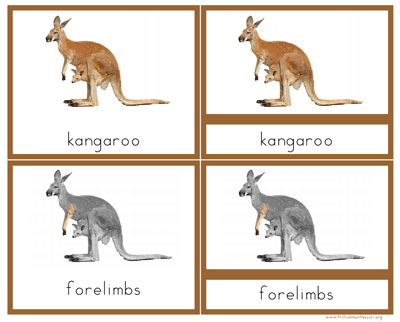 Parts of a Kangaroo Nomenclature Cards with Definitions from Trillium Montessori at Teachers Pay Teachers