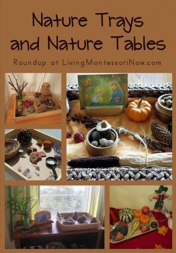 Nature Trays and Nature Tables
