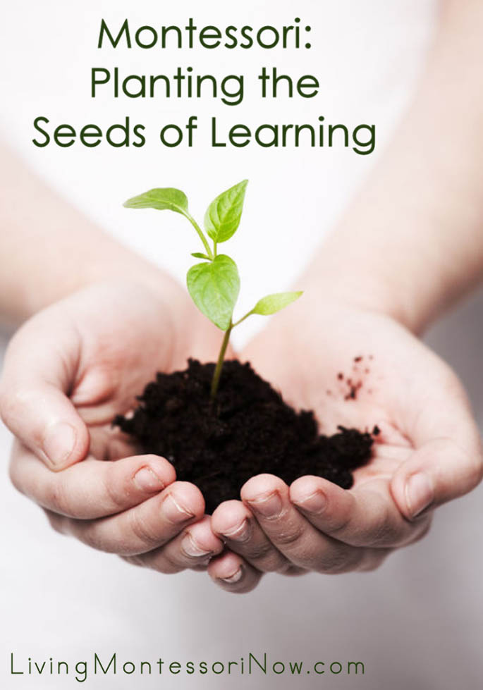 Montessori: Planting the Seeds of Learning