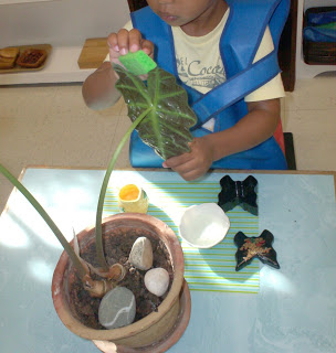 Montessori Leaf Washing Activity (Photo from the Moveable Alphabet)