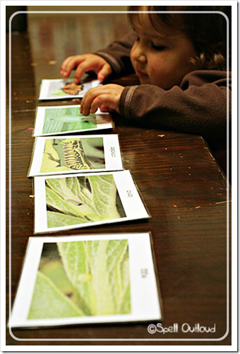 Life Cycle of a Butterfly Cards from Montessori Print Shop (photo from Spell Outloud)