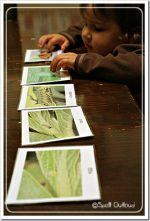 Activity of the Week – Life Cycle of a Butterfly