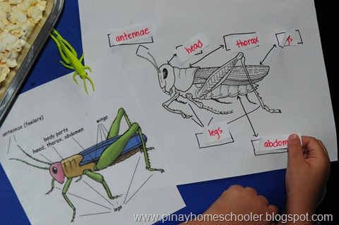 Parts of a Grasshopper (Photo from The Pinay Homeschooler)