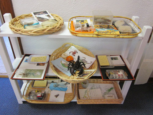 Insect Unit (Photo from Inspired Montessori and Arts at Dundee Montessori)