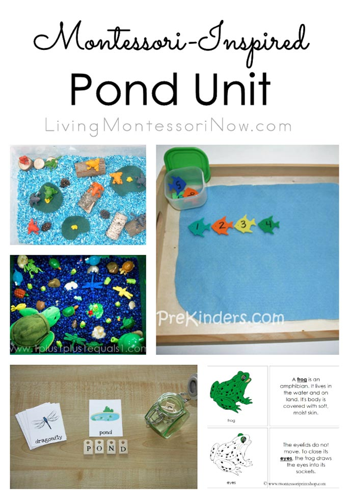 Montessori-Inspired Pond Unit
