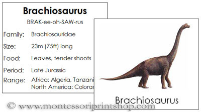 Free Dinosaur Cards from Montessori Print Shop