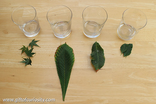 A Chromatography Experiment for Fall (Photo from Gift of Curiosity)
