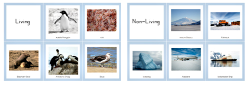 Antarctica Living and Non-Living Sorting Cards (from 7 Continents A-Z by Trillium Montessori)