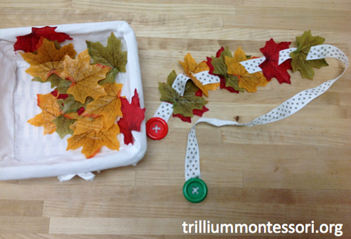 Leaf Button Snake (Photo from Trillium Montessori)