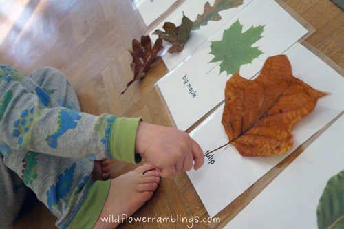 Leaf Identification and Sorting (Photo from Wildflower Ramblings)