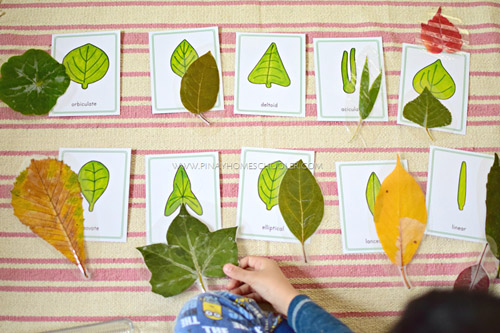 Leaf Shapes Study (Photo from The Pinay Homeschooler)