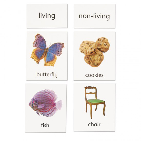Living and Non-Living Classification from In-Print for Children at Montessori Services