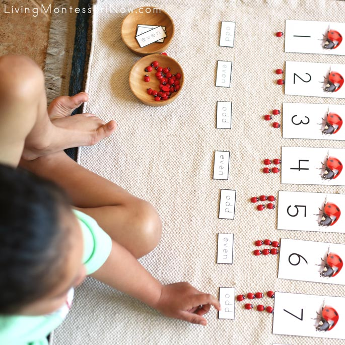 Completing Ladybug Cards and Counters with Odd and Even Labels