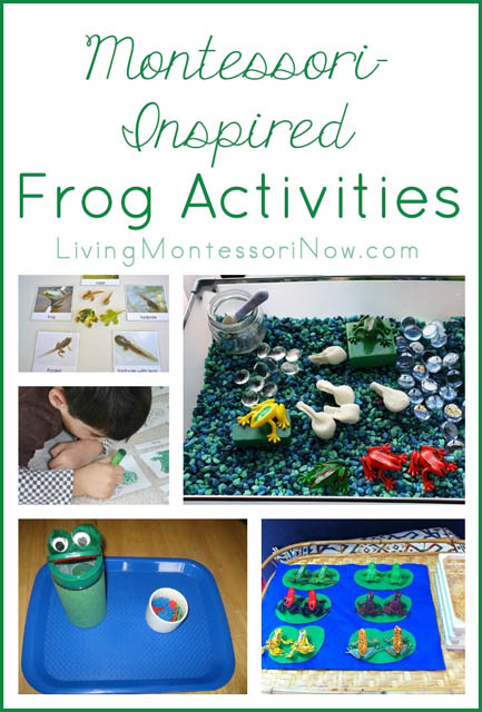 Montessori-Inspired Frog Activities