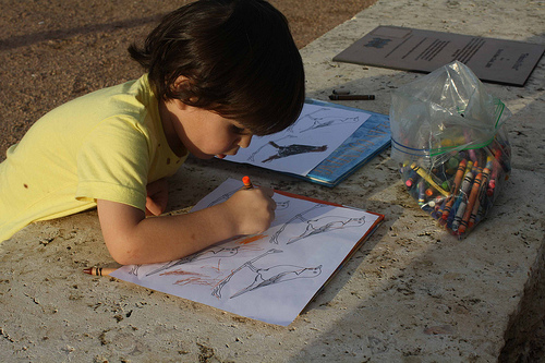 Bird Unit Study (Photo from Montessori MOMents)