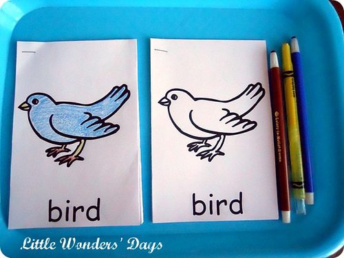 Parts of a Bird Booklet (Photo from Little Wonders' Days)