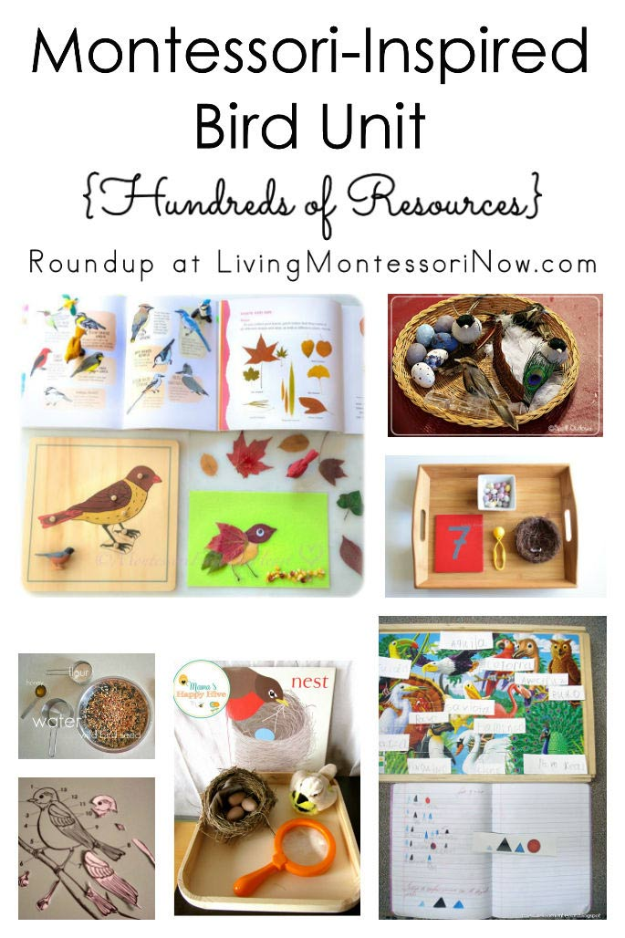 Montessori-Inspired Bird Unit {Hundreds of Resources}