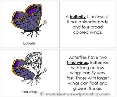 Butterfly Nomenclature Book (Image from Montessori Print Shop)