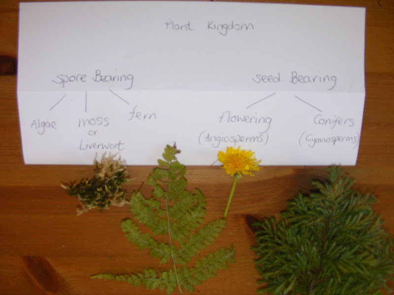 Botany Classification (Photo from Homeschool Escapade)