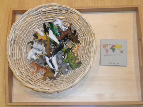 Sorting Animals by Continent (Photo from Discovery Days and Montessori Moments)