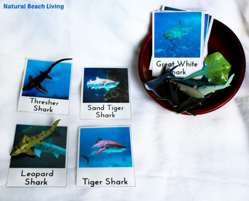 Shark Matching (Photo from Natural Beach Living)