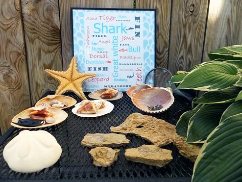 Summer Nature Table with Sharks (Photo from Little Wonders' Days)
