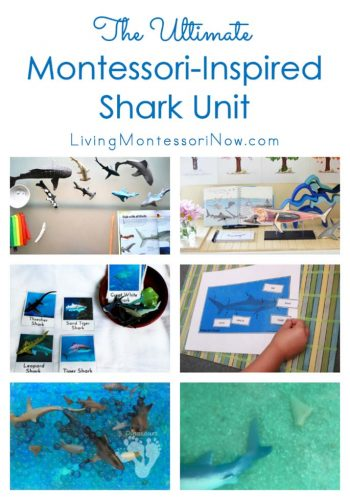 The Ultimate Montessori-Inspired Shark Unit