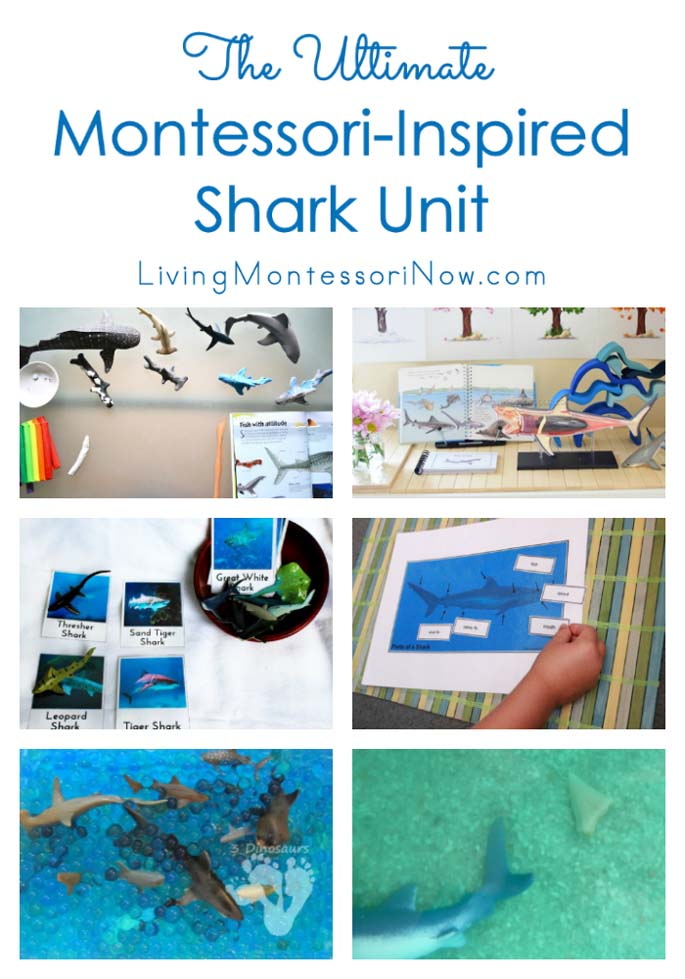 The Ultimate Montessori-Inspired Shark Unit {Montessori Monday}