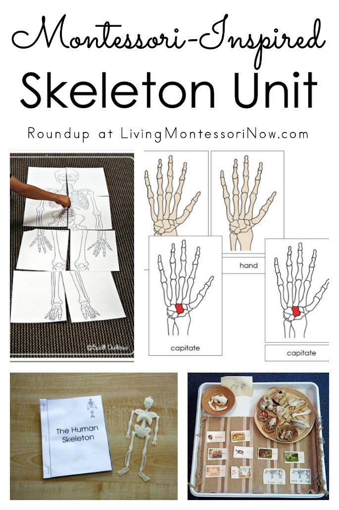 Montessori-Inspired Skeleton Unit
