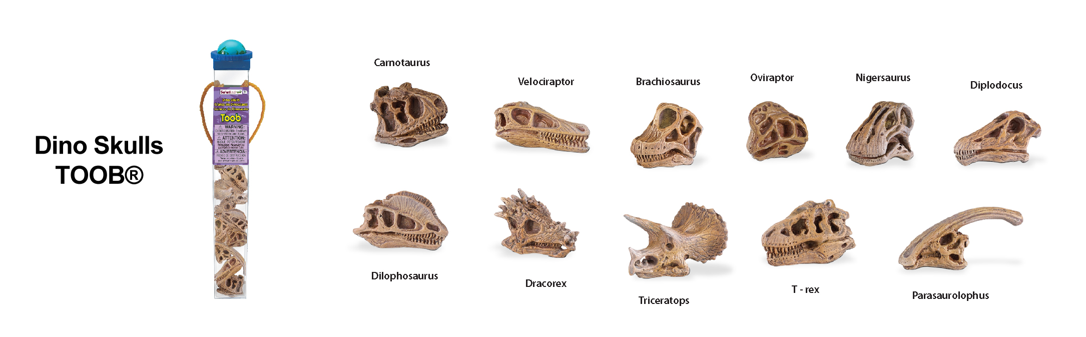 Dino Skulls TOOB Key (Image from Safari Ltd.)