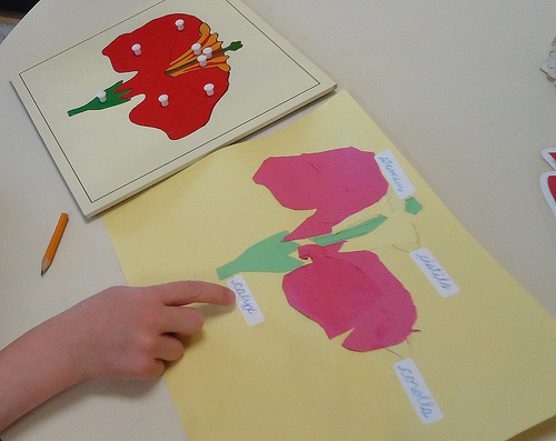 Labeling a Collage of the Parts of a Flower (Photo from To the Lesson!)