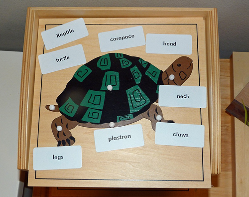 Turtle Puzzle Activity (Photo from Homeschool Mo)