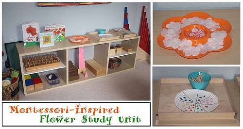 Montessori-Inspired Flower Study Unit (Photo from Montessori MOMents)
