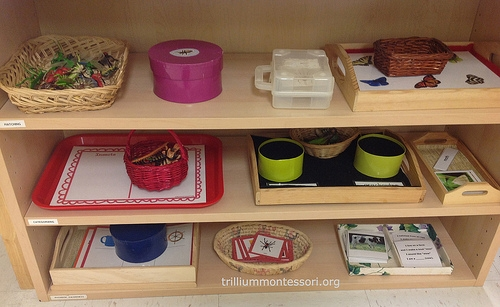 Buggy Works on the Pre-Literacy Shelf (Photo from Trillium Montessori)