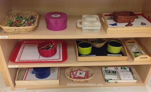 Ideas from Montessori Schools – Trillium Montessori