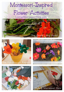 Montessori-Inspired Flower Activities