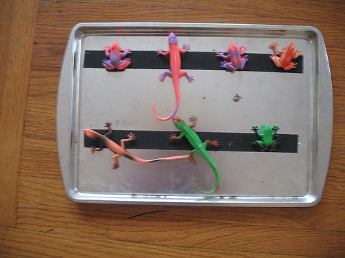 Portable Practical Life Amphibian Tray (Photo from We Can Do All Things)