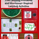 Montessori Monday – Free Ladybug Printables and Montessori-Inspired Ladybug Activities