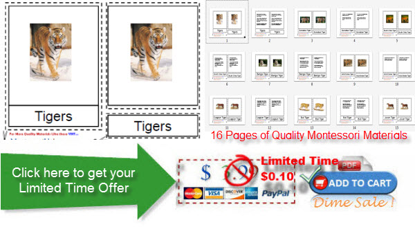 Montessori Helper Tiger Dime Sale