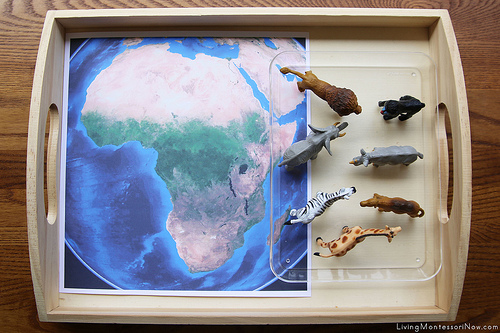 Animals of Africa Tray