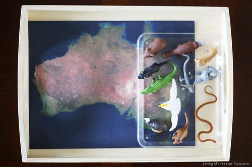 Animals of Australia Tray