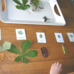 Activity of the Week – Classifying Leaves