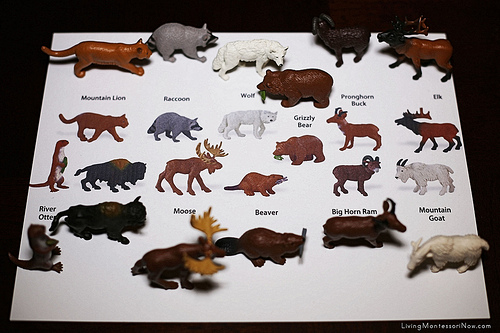 North American Animal Matching Using Safari Ltd. TOOB