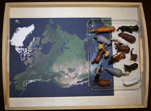 Animals of North America Tray