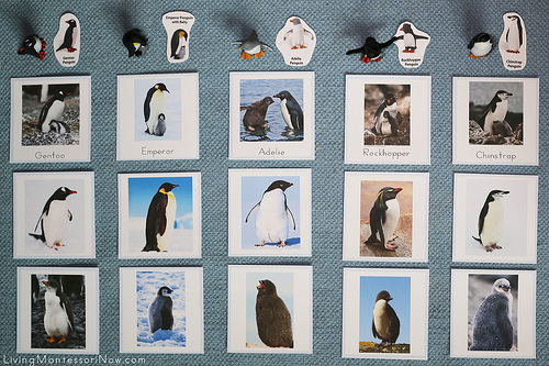 Antarctica Penguins and Their Chicks Layout