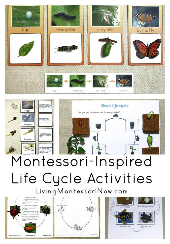 Montessori-Inspired Life Cycle Activities