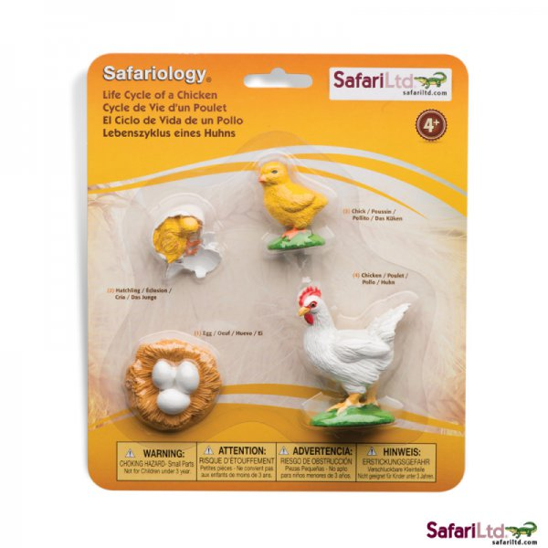 Safari Ltd. Life Cycle of a Chicken